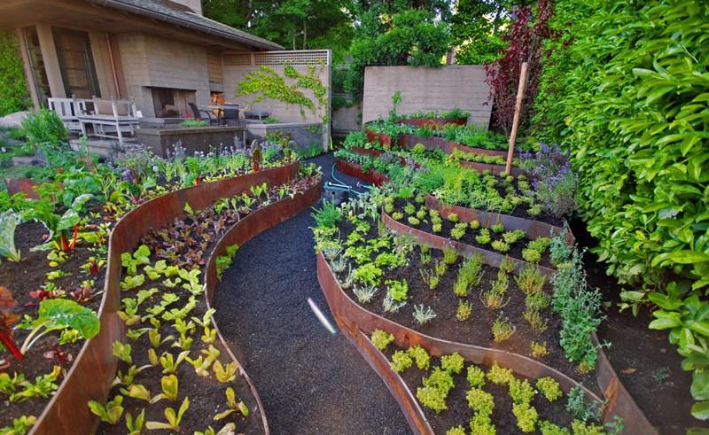 curved corten veggie beds