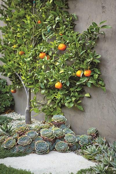 succulents-espalier